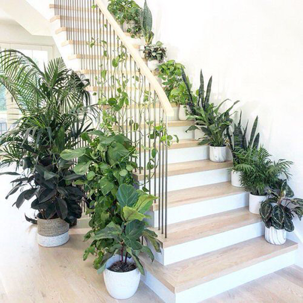 welcoming-jungle-on-the-stairs