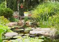 gorgeous-water-lilies-garden-with-pond