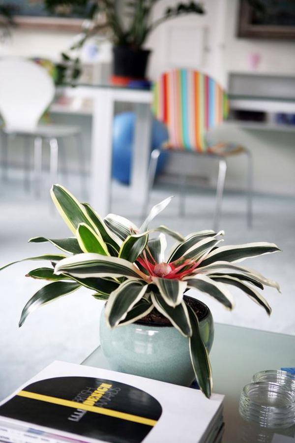 indoor-bromeliad-plants-grow-without-sunlight